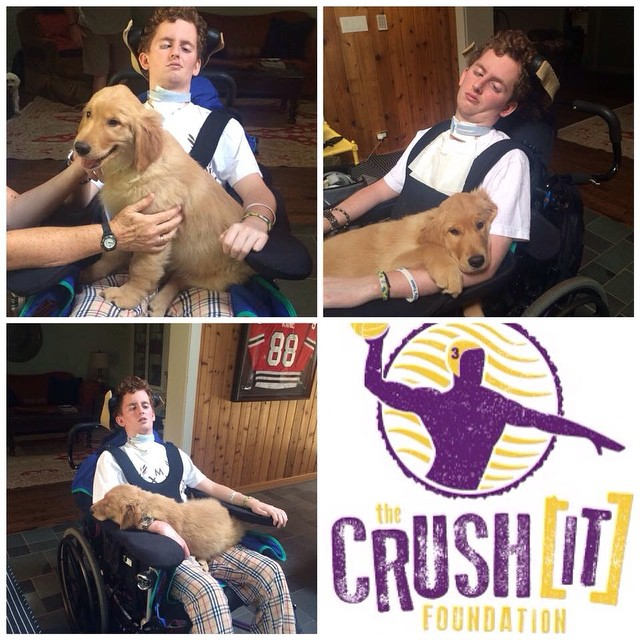 From Patrick Stein 'Crush It' Foundation: Newest member of Patrick's support team - Ca$h the Golden Retriever #companiondog