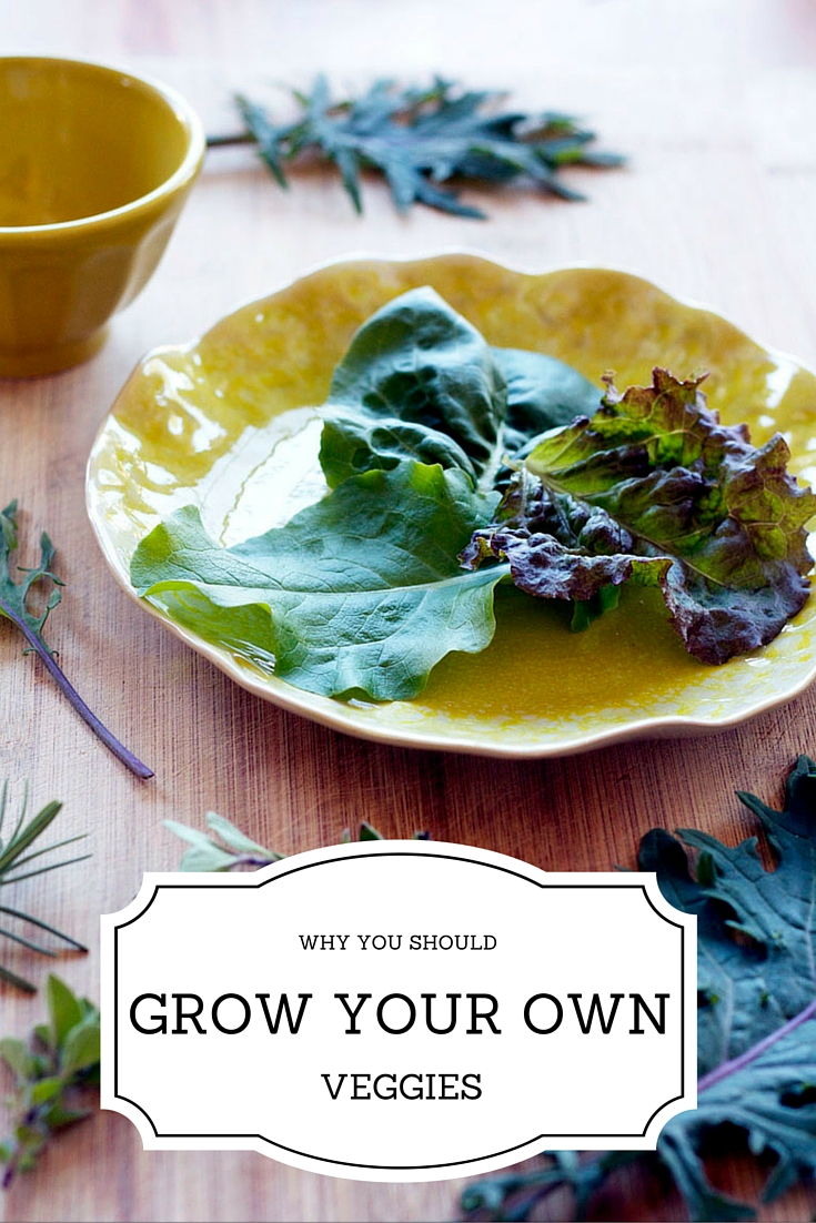 Why You Should Grow Your Own Veggies. I'm so used to going to the store and buying my veggies and having them taste a certain way, but I really want to try to grow my own organic garden.