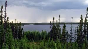 boreal_forest.jpg