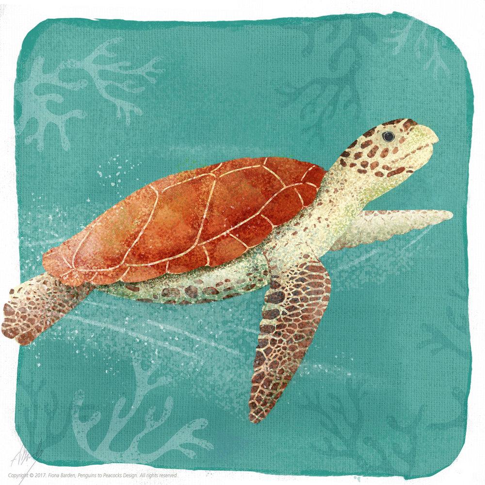 hawksbill_turtle_1.jpg