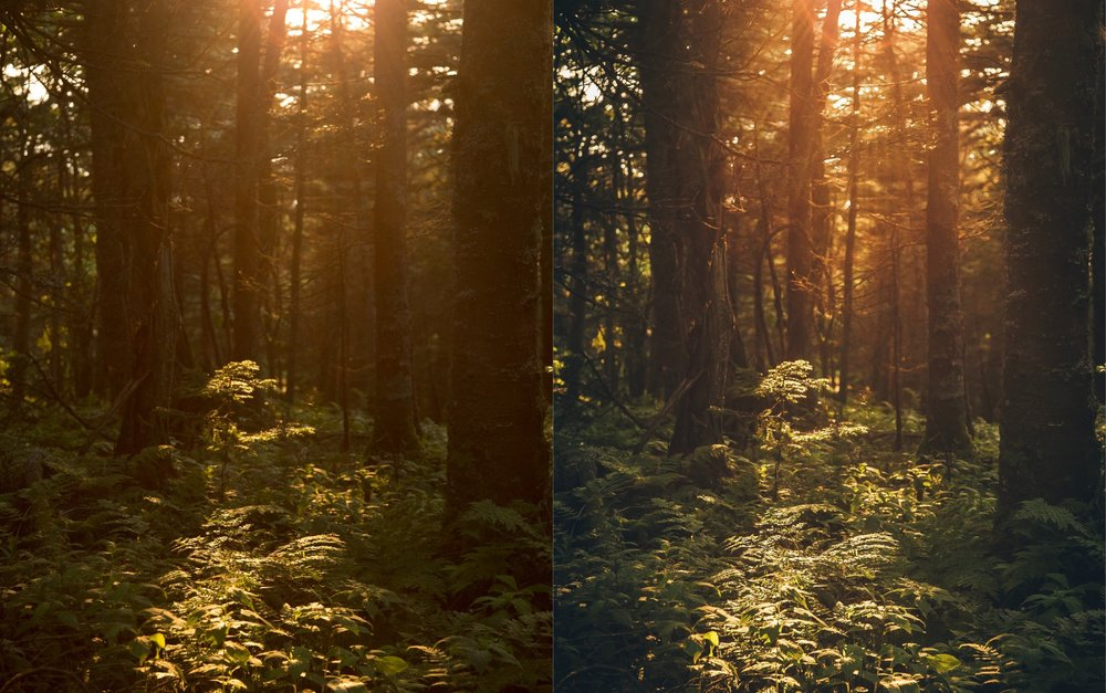 Faded Forest Sunset