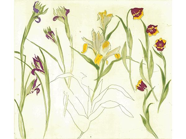 BANNER - Elizabeth Blackadder RA, Irises, Lilies, Tulips, Etching.jpg