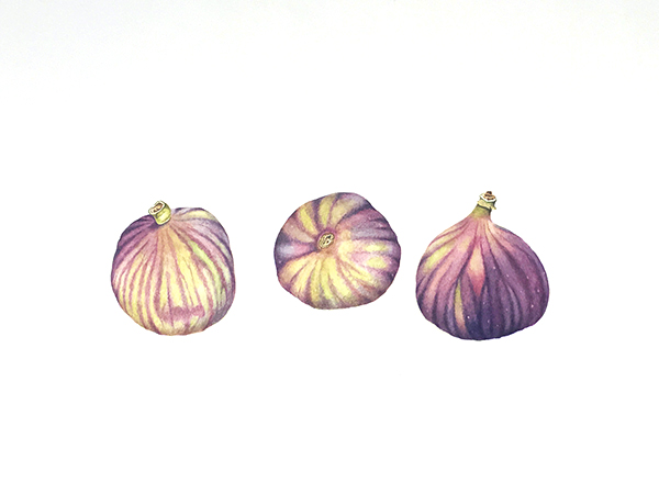 BANNER - David Pearson, Figs, Watercolour on paper.jpg
