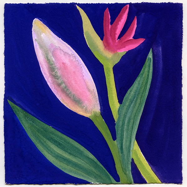 SQUARE - Nerys Johnson, Stargazer Lily Bud and Nerine Bud, Gouache on paper, 15.5 x 15cm.jpg