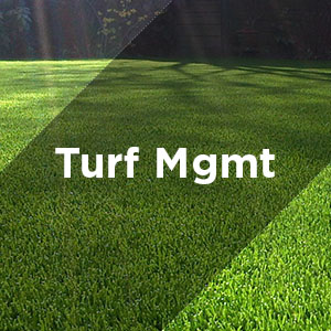 turf management