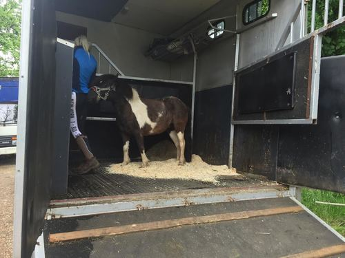 Pippa being loaded to go to her new home :-)