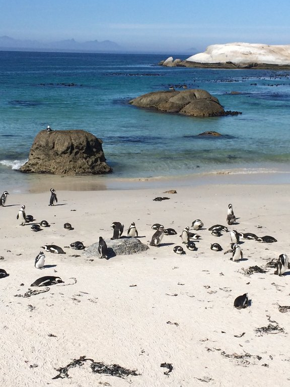 Praia dos pinguins
