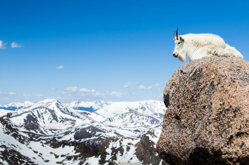 king of the mountain.jpg