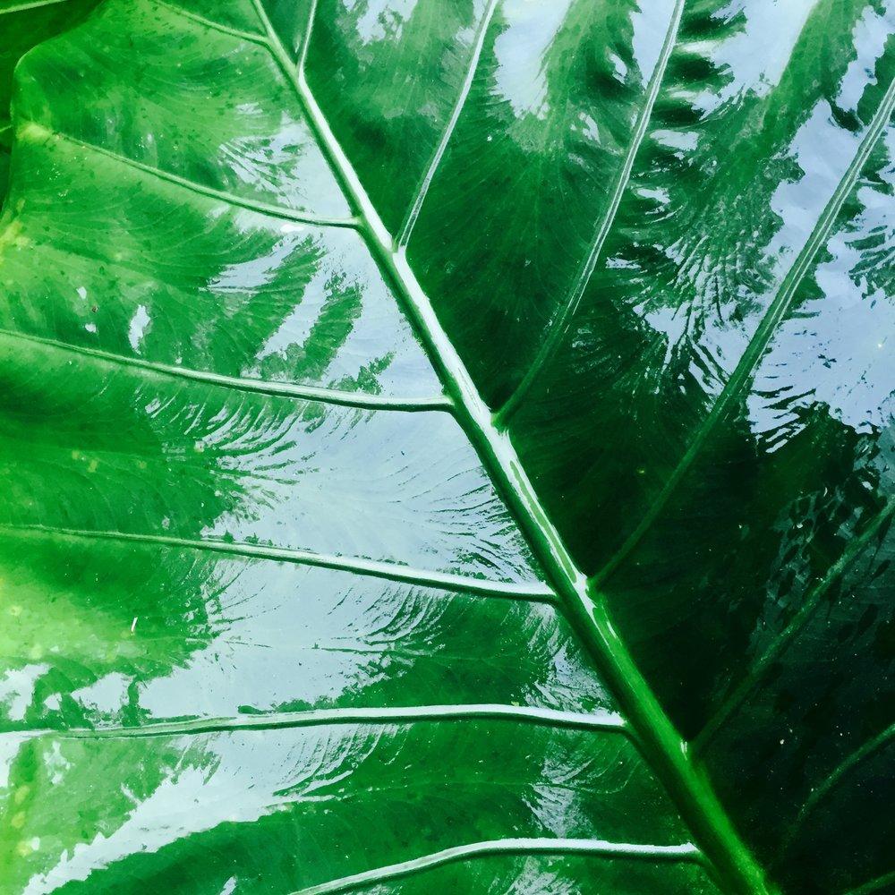 """Amazon Leaf"" by Joseph Cassarino"