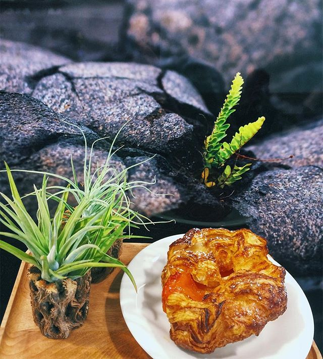 [HONOLULU EATS] Happy #NationalKouignAmannDay! Originally from 🇫🇷, Kouign Amann (pronounced queen-amman) is a round crusty cake with folded layers of butter and sugar. Brought to the States by @bpatisserie in San Francisco, now it is also available at @konacoffeepurveyors in Hawaii. If you visit SF or Hawaii, definitely try some!