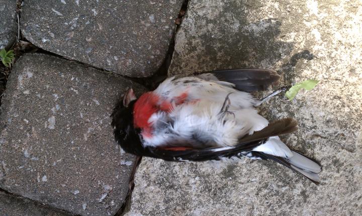 Dead Bird 2