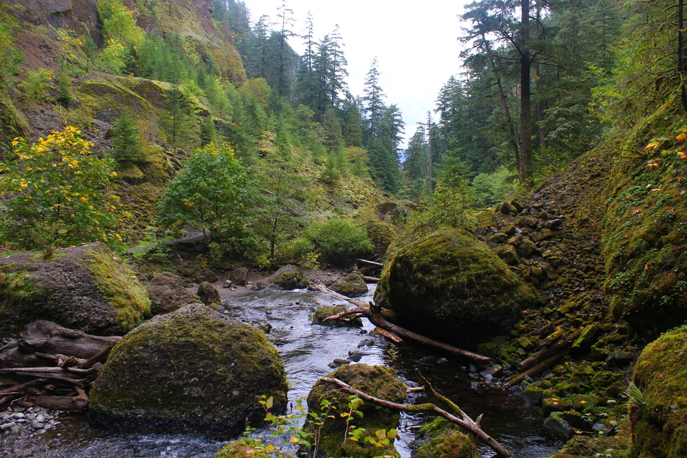 ALONG THE WALK INTO WAHCLELLA FALLS