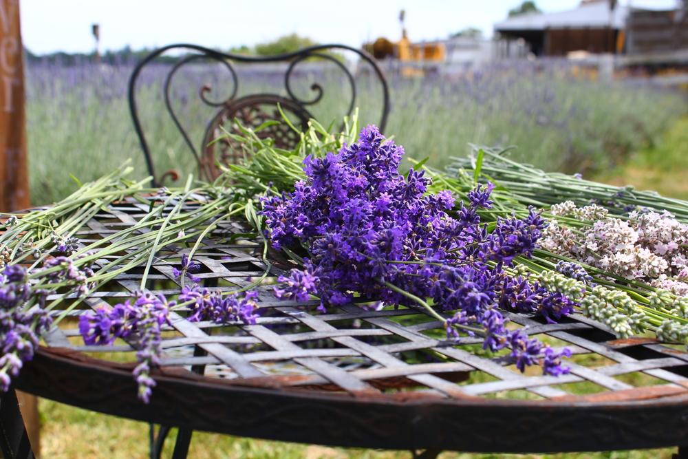 06-22 Lavender (12).JPG