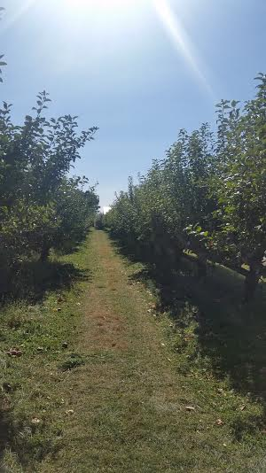 A local Apple Orchard we visited last week