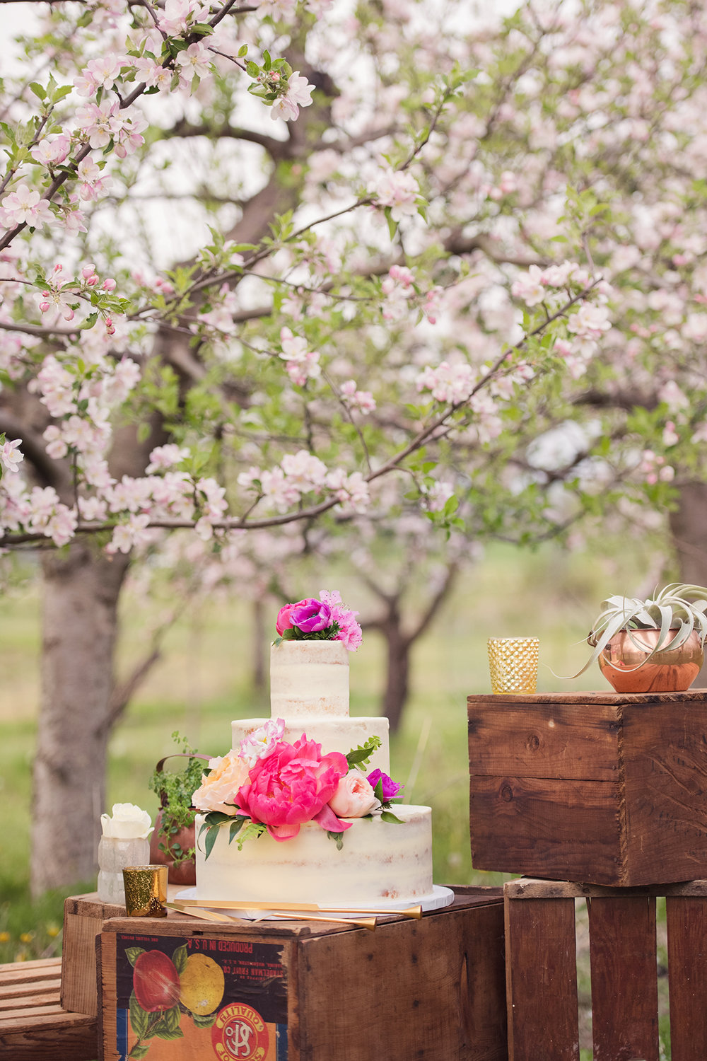 Orchard Styled shoot