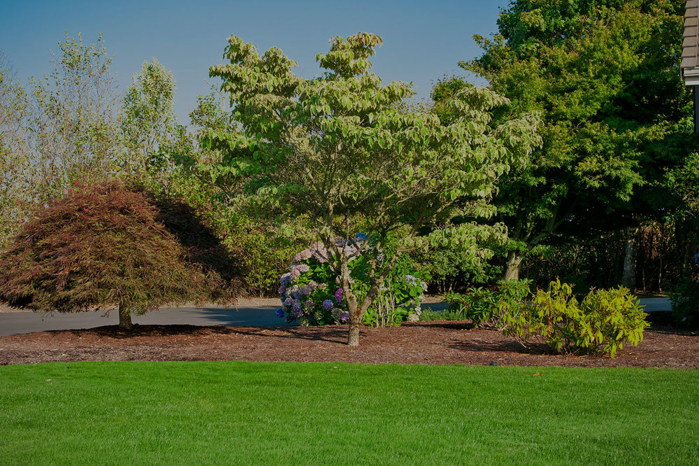 Glass Tree Care & Spray Service, Inc.    Professional Tree, Shrub, & Lawn   care in Eugene & Springfield since 1948   Tree and Shrub Services >