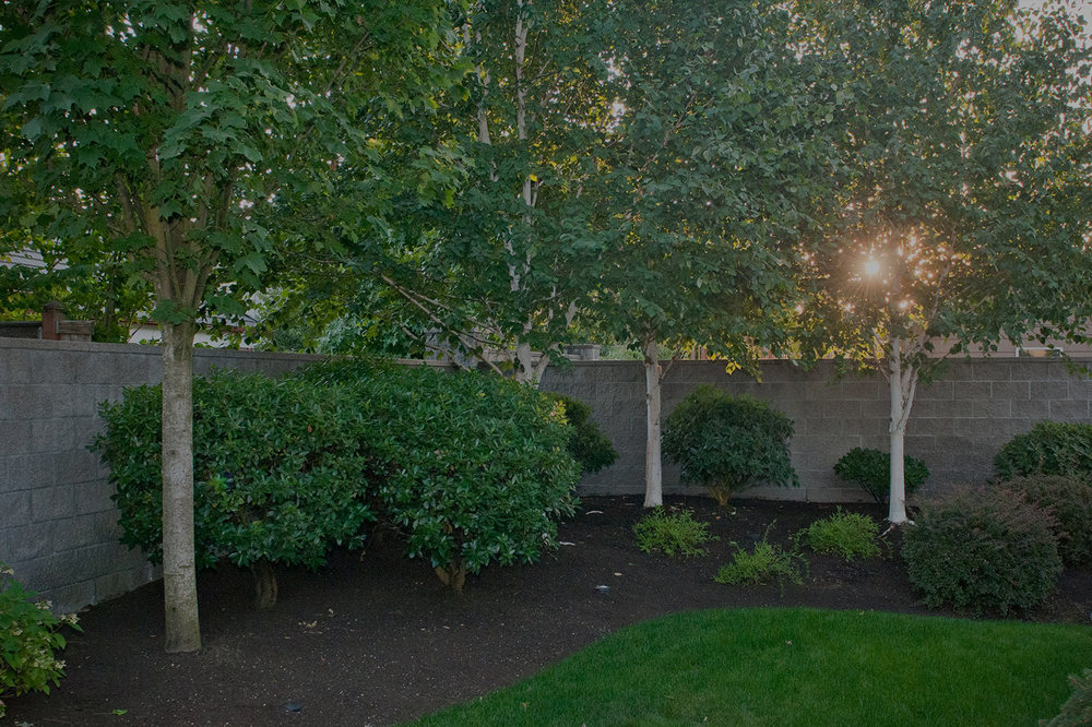 Glass Tree Care & Spray Service, Inc.    Professional Tree, Shrub, & Lawn   care in Eugene & Springfield since 1948   Wedgle Injection Treatments >