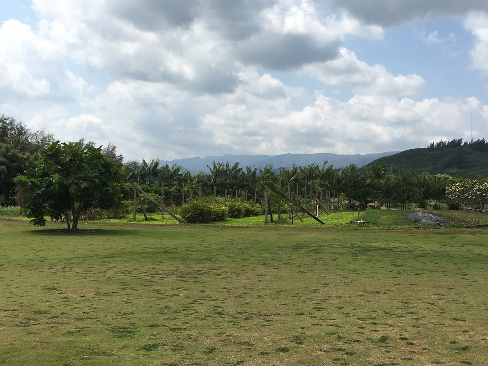 FIELD BEHIND THE CAFE.jpg