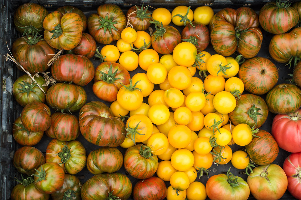 lowells_farm-311.jpg