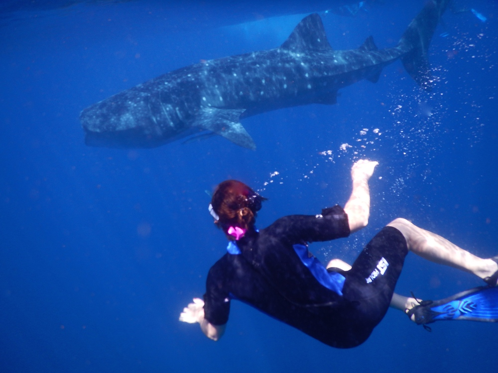 One of the coolest experiences of my life! Swimming with Whale Sharks in Isla Mujeres, Mexico - Sheana M.