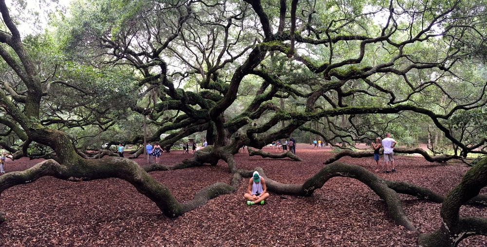 The most beautiful tree I've ever seen in Charleston, SC - Sheana M.