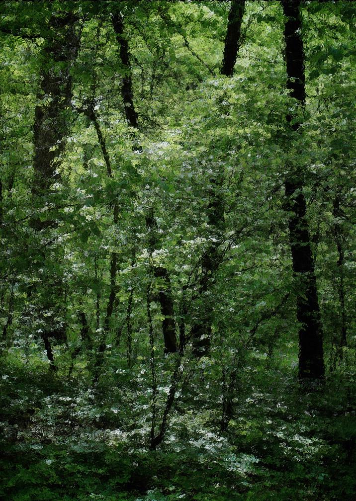michaeleastman-forestparkforever-25.jpg