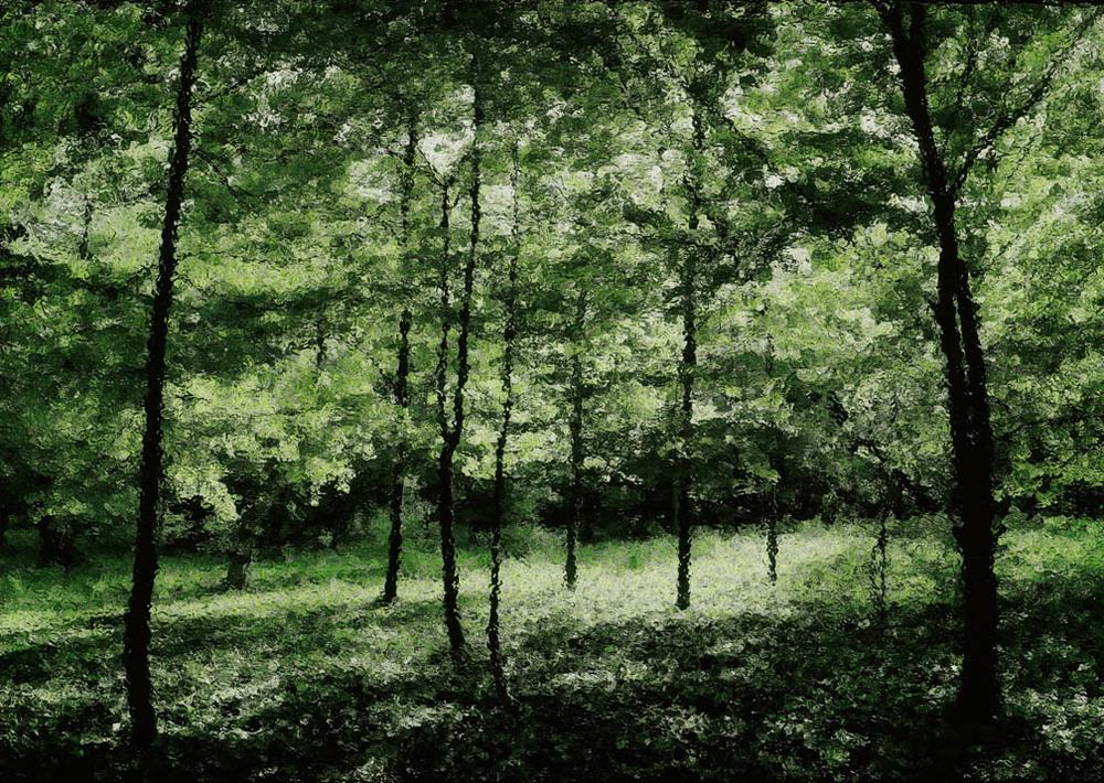 michaeleastman-forestparkforever-24.jpg