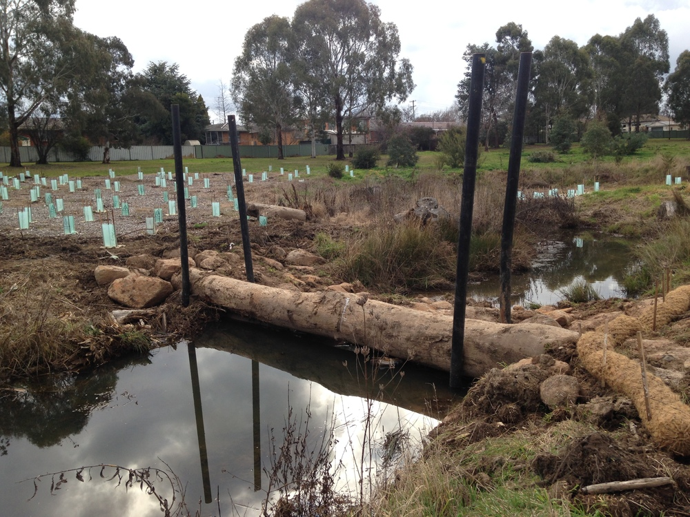 Revegetation of Rifle Range Creek, Orange