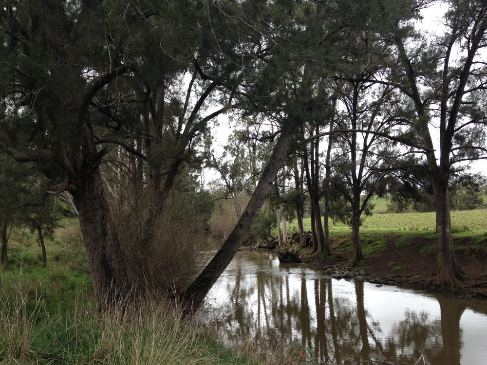 The Bell River in the Cabonne Local Government Area is part of the Fish Habitat Recovery Project that is a partnership between Cabonne Council, Environment & Waterways Alliance and Central Tablelands Local Land Services.