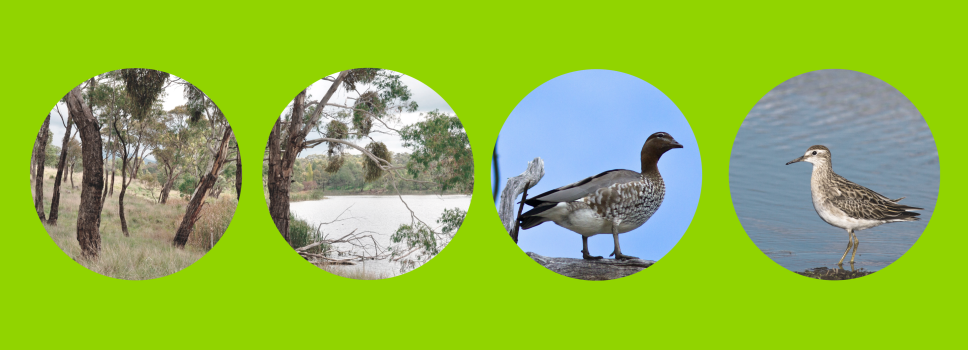 Our Projects: Orange City Council - Habitat Island for Migratory Birds