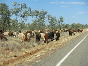 ROADSIDE GRAZING RESOURCES