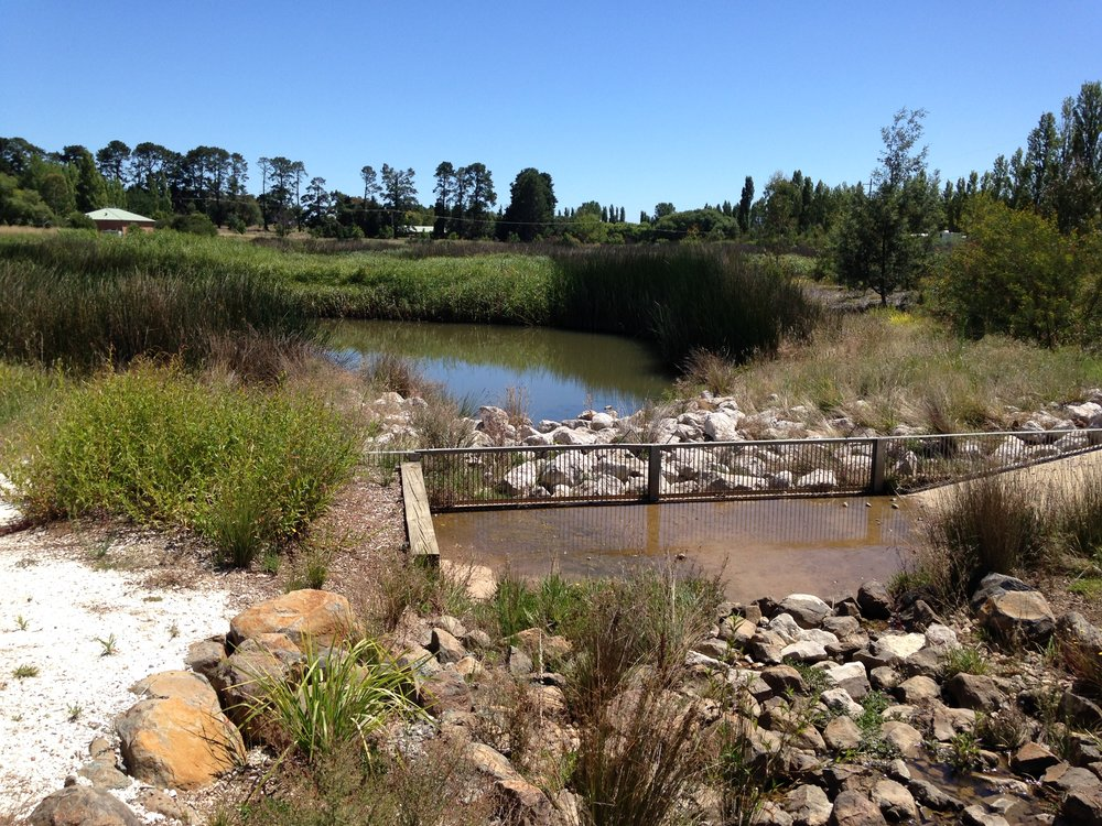 Ploughmans Creek Wetland