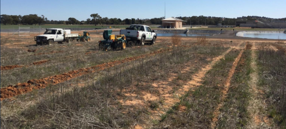 Direct seeding was considered the best revegetation method for the degraded sites
