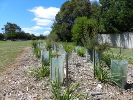 Revegetation site within an urban drainage reserve, Bathurst