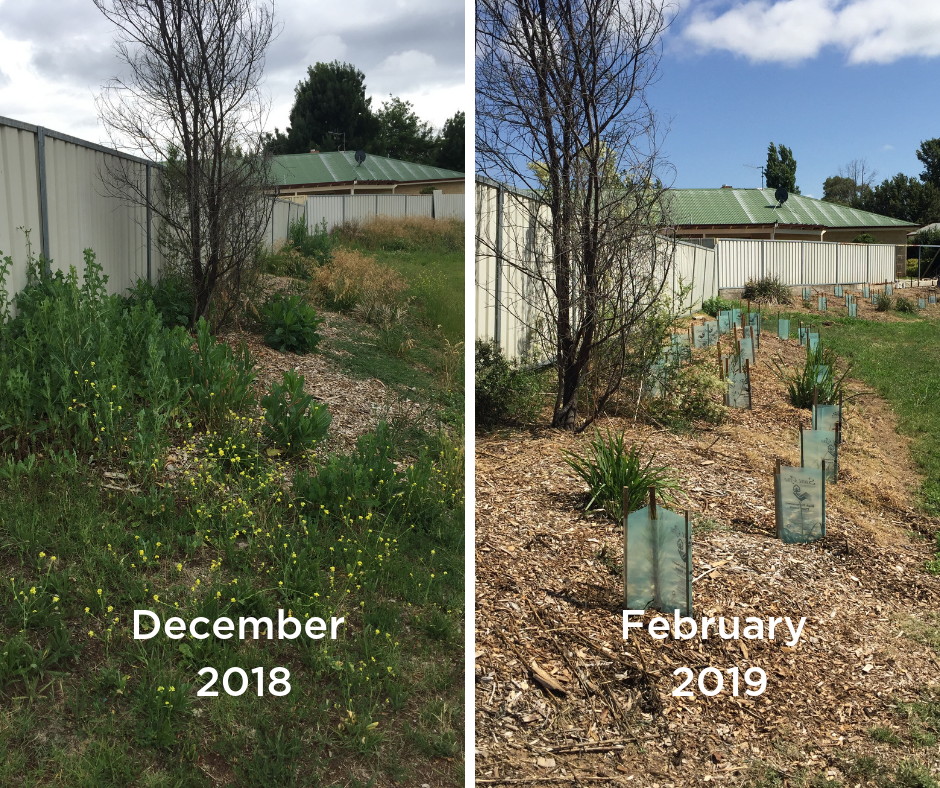 Infill planting has been completed to improve the habitat values of the previous plantings