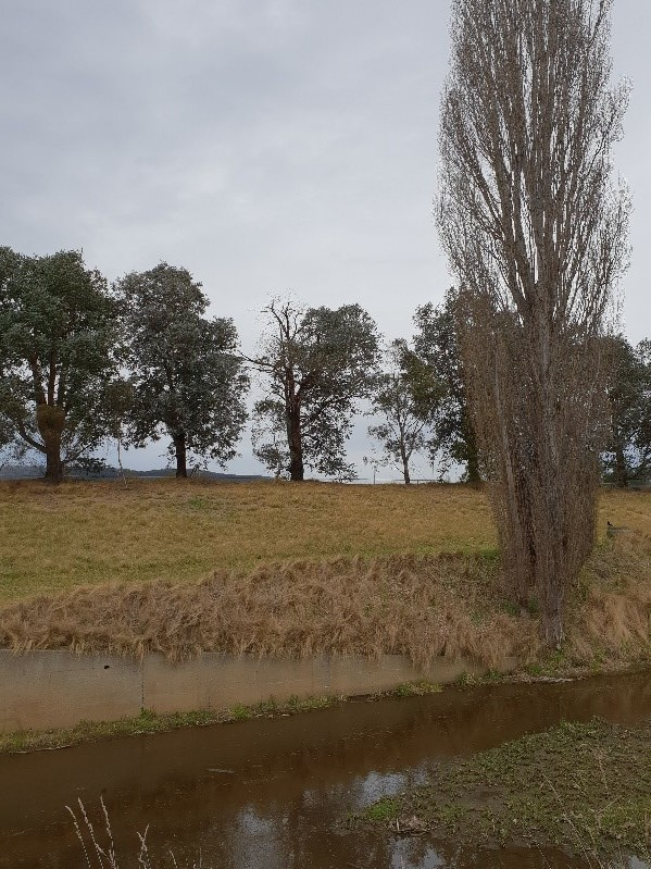 A degraded section of Farmers Creek in Lithgow