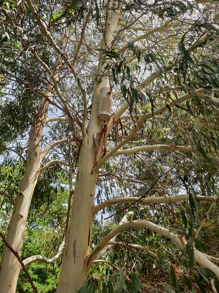 Hybrid Habitat Hollow for treecreepers and gliders