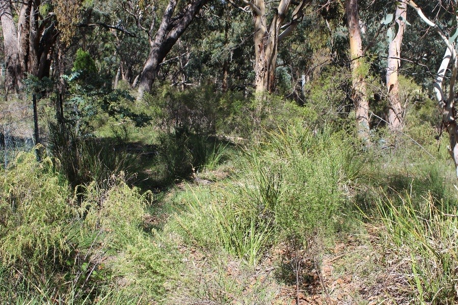 Slingsbys Road project site with open vegetation structure suitable for the Purple Copper Butterfly