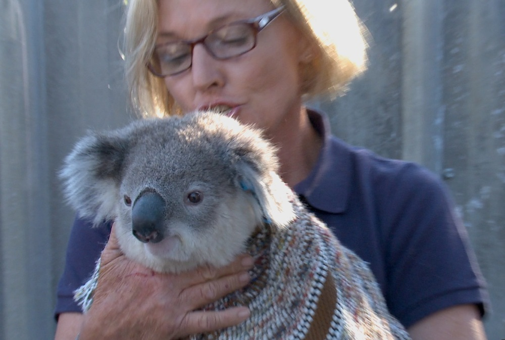 Cultivating Murder - Koala rescue.