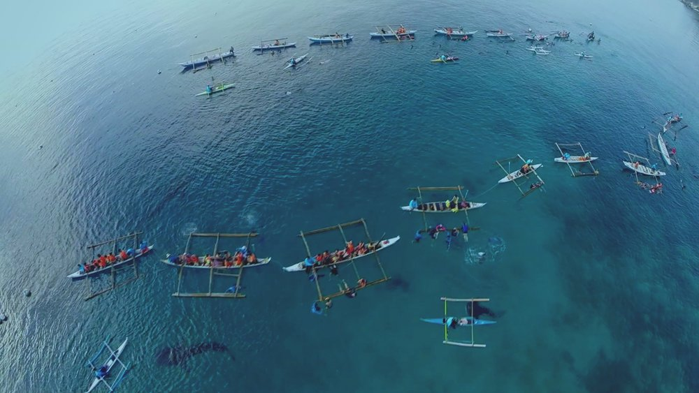On the Brink: Uncharted Waters - Whale sharks in Oslob, Cebu are lured into shallow waters by feeder boats, making it easier for tourists to interact with them.
