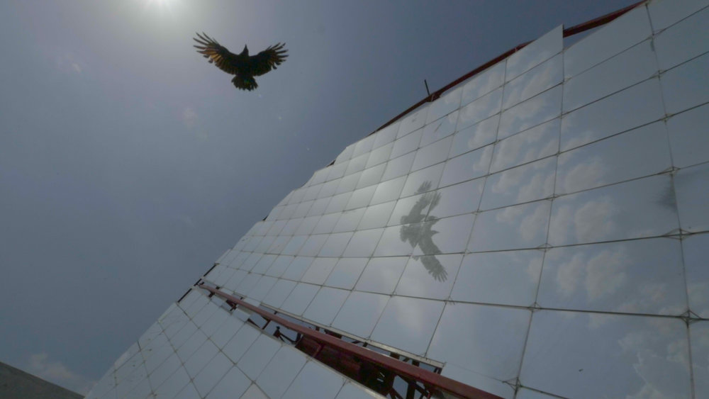 Photovoltaic - A bird flies over a solar cooker at Barefoot College.