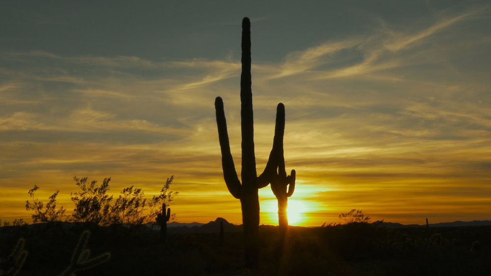 Gunwalkers is set in 2009 Arizona in the unforgiving Sonoran Desert.