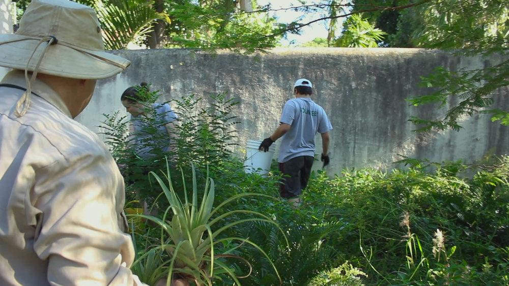 Naturally Selected - Sam approaches volunteers at Vizcaya Village.