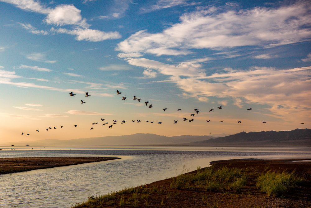 The meeting of the Alamo River and the Salton Sea. Migratory Birds fly over the Salton Sea near the Base of the Alamo River. Salton Sea, California.