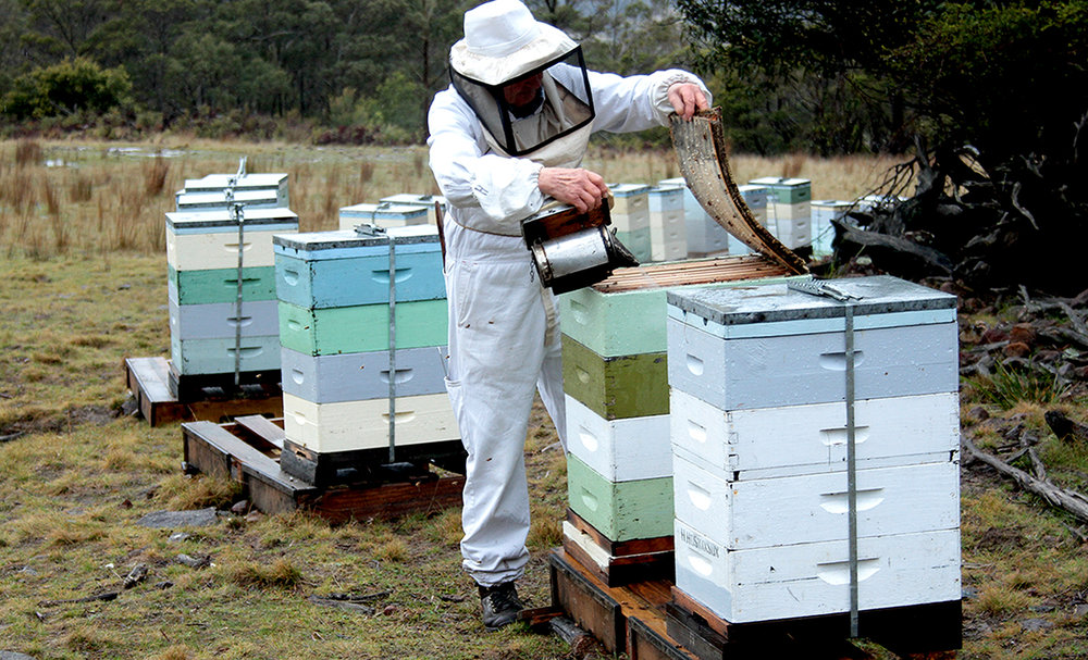 Looking After Our Food - Hedley Hoskinson keeping bees
