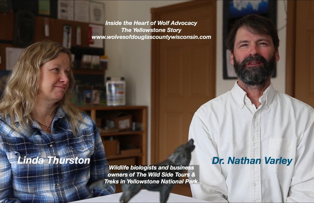 Inside the Heart of Wolf Advocacy: The Yellowstone Story