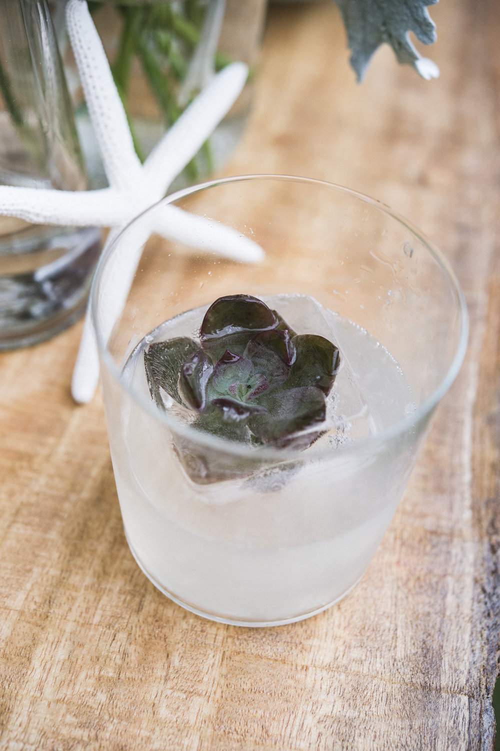 Cocktail with a succulent garnish
