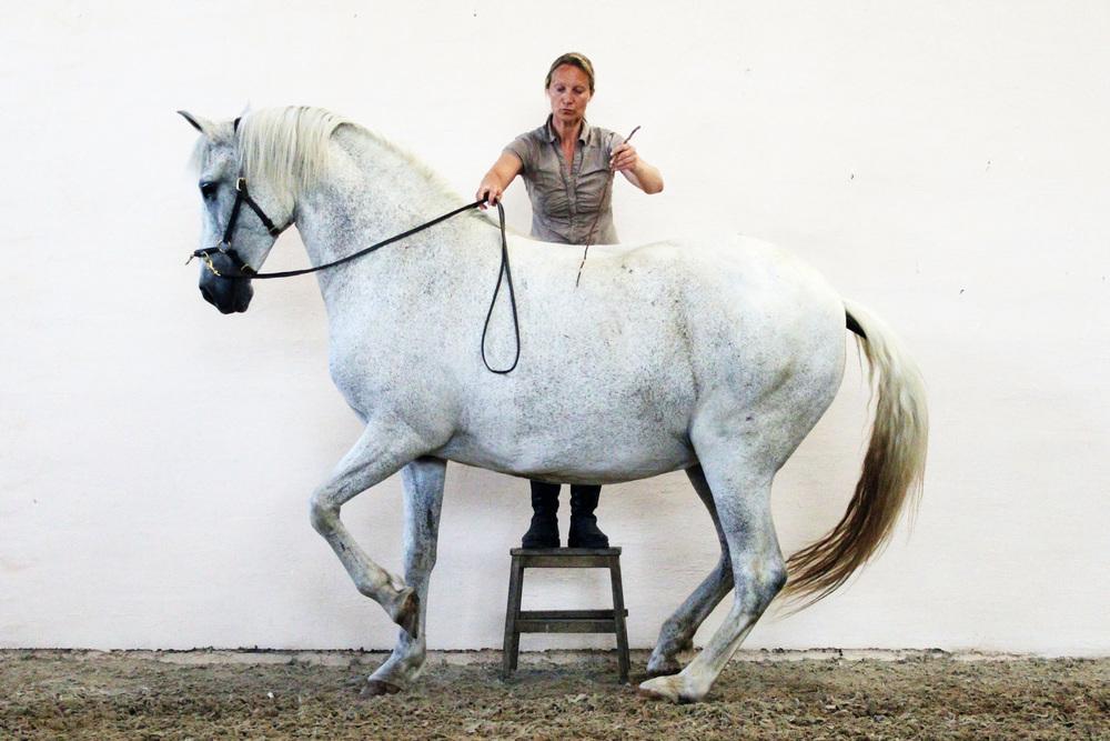 Hanna Engström Academic Art of Riding