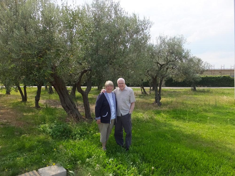 Ortona - Moro view cemetery oliviers 2.JPG