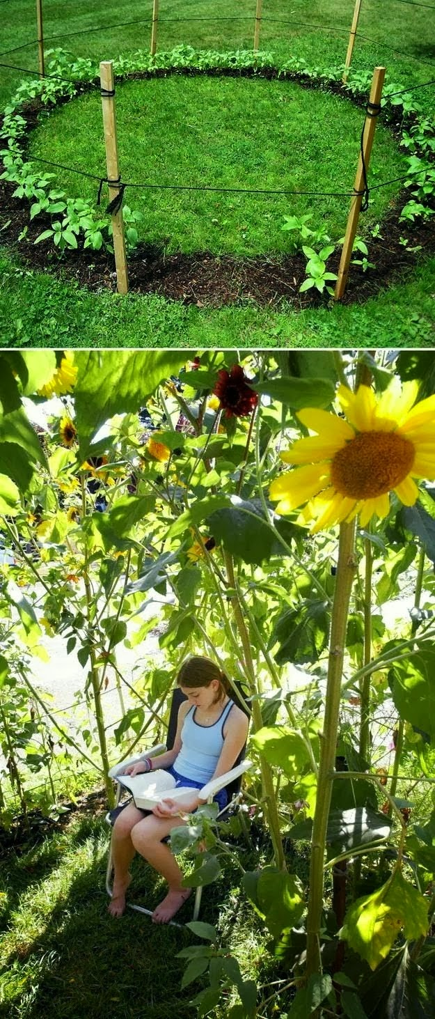 Grow a sunflower house for the kids to play in.  31 Cheap And Easy Backyard Ideas That Are Borderline Genius.jpg